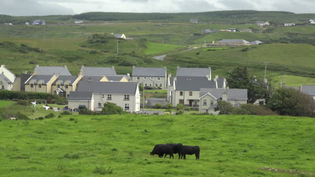 ireland doolin houses and cows - doolin stock videos & royalty-free footage