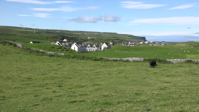 ireland doolin view with black cows and houses - doolin stock videos & royalty-free footage
