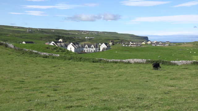 Ireland Doolin view with black cows and houses zoom