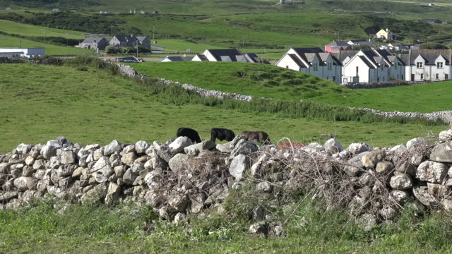 ireland doolin view with stone wall pan and tilt - doolin stock videos & royalty-free footage