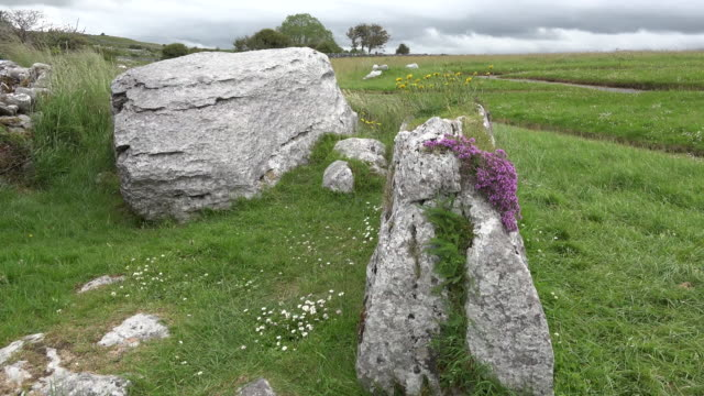 Ireland the Burren limestone rock with wild thyme and grass