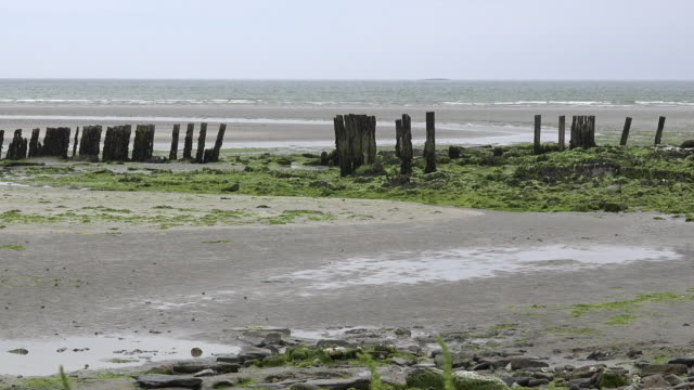 ireland west cork estuary with pilings pan - county cork stock videos & royalty-free footage
