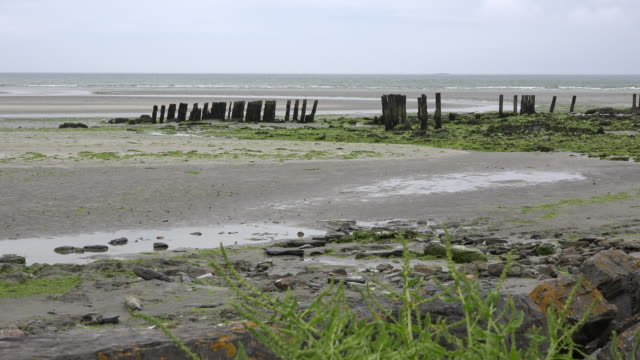 ireland west cork estuary with pilings - estuary stock videos & royalty-free footage