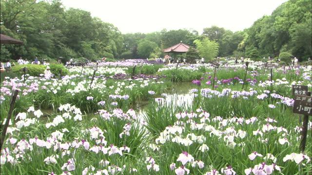 Irises surround a gazebo in a garden.