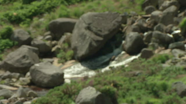 ws zo irish stream flowing in valley / rathdum, ireland - aufblenden stock-videos und b-roll-filmmaterial