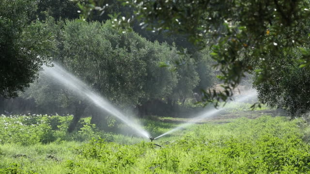 Irrigating crops in Skala Eresou on Lesvos, Greece, climate change models predict that the southern Meditteranean conutries will become a lot hotter and drier with increased water security issues.