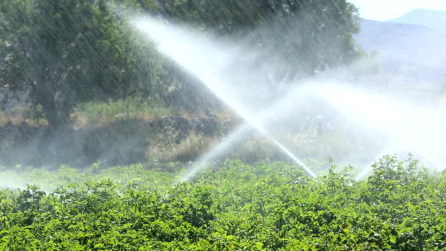 irrigating potato crops - crop plant stock videos and b-roll footage