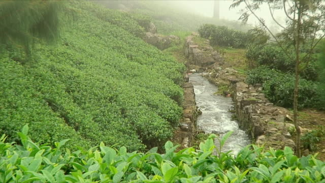 ms zo ws irrigation canal on tea plantation on hill, haputale, sri lanka - sri lankan culture stock videos & royalty-free footage