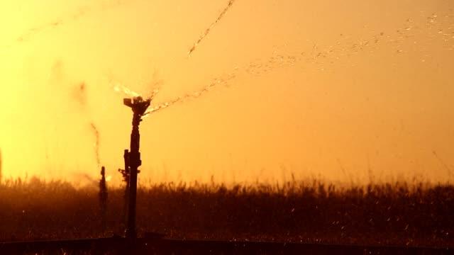 irrigation equipment, agricultural water sprinklers watering farm plants crop field - sprinkler stock videos & royalty-free footage