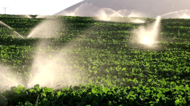 irrigation equipment, agricultural water sprinklers watering farm plants crop field slow motion - beet stock videos & royalty-free footage