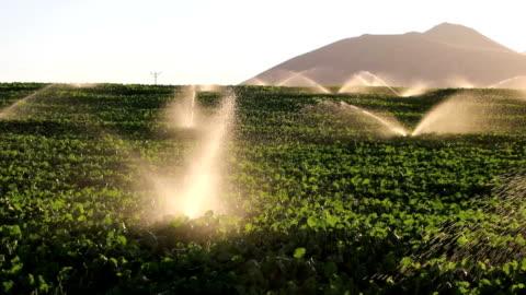 vidéos et rushes de équipement d'irrigation, de l'agriculture, d'extincteurs automatiques à eau arroser les plantes culture field farm - champ