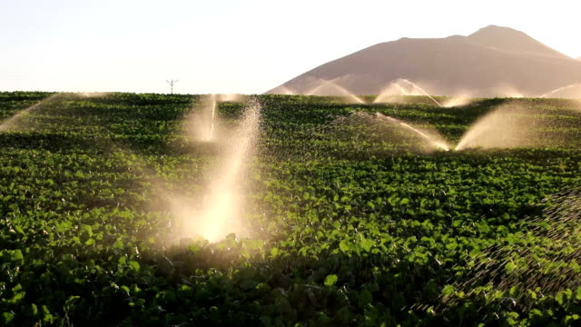 irrigation equipment, agricultural water sprinklers watering farm plants crop field - sprinkler system stock videos & royalty-free footage