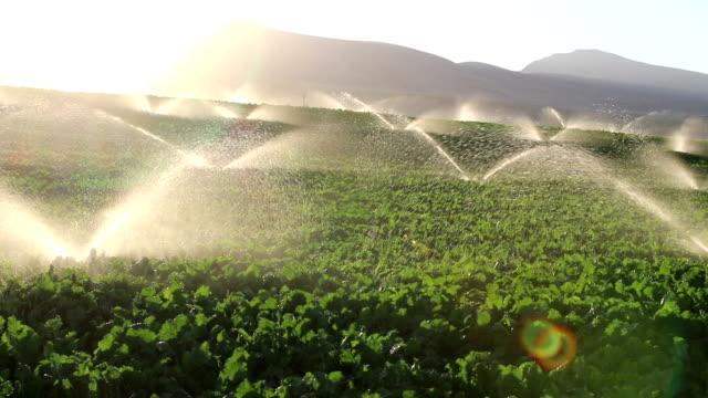 irrigation equipment, agricultural water sprinklers watering farm plants crop field - watering stock videos & royalty-free footage