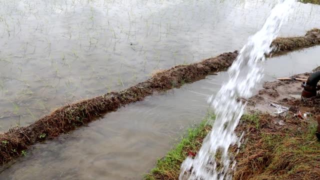 vídeos y material grabado en eventos de stock de riego en green field - equipos de riego