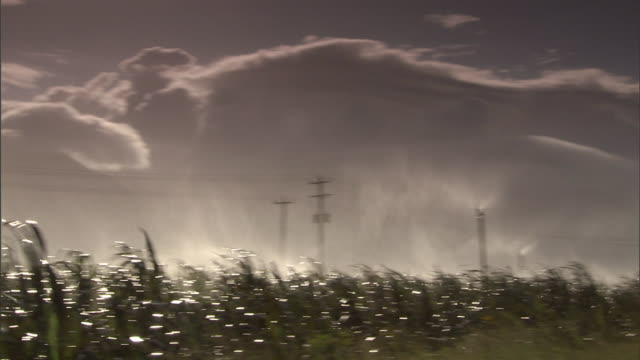 irrigation mist blows over a sugarcane field on a cloudy day in maui. - maui stock videos & royalty-free footage