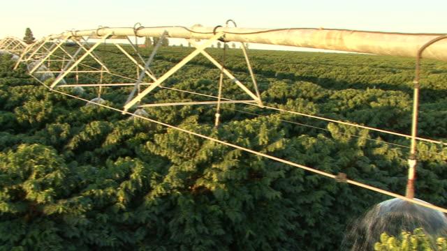 MS PAN Irrigation pivots working at coffee plantation / Goias, Brazil
