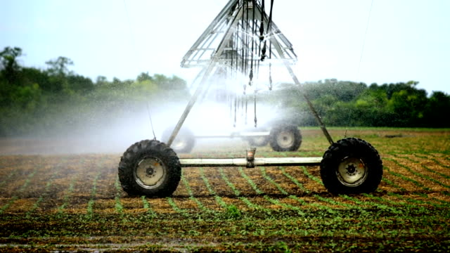 irrigation sprinklers over cultivated land. - water pump stock videos & royalty-free footage