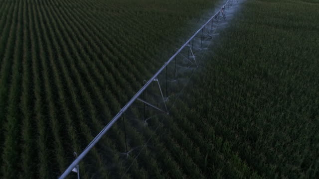 Irrigation system in corn field, aerial