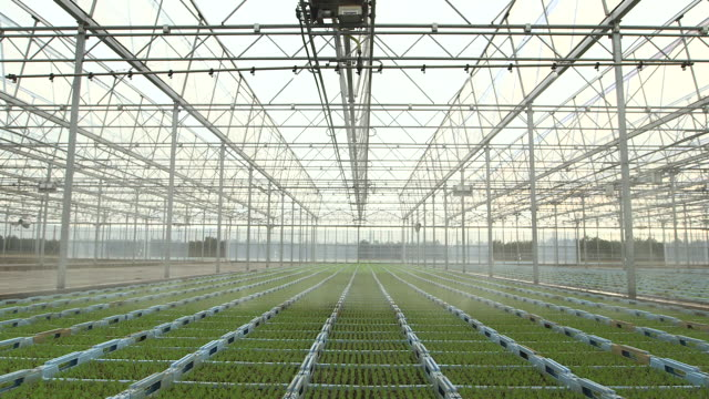 vídeos de stock e filmes b-roll de irrigation system waters seedling lettuce plants, uk - alface