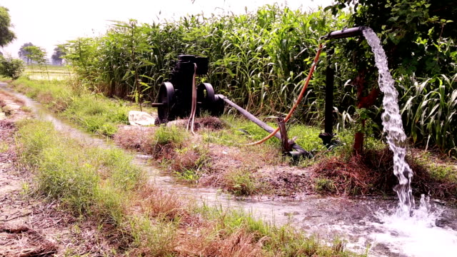 irrigation  using tube well in rural india - water pump stock videos & royalty-free footage