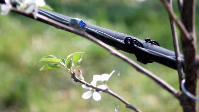 irrigazione (hd - attrezzatura per l'irrigazione video stock e b–roll
