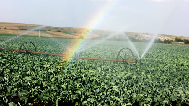 irrigation (hd) - sprinkler stock videos and b-roll footage