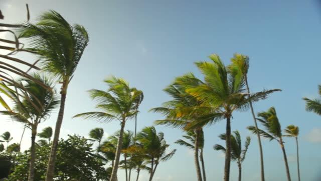 island palm pan - caribbean stock videos & royalty-free footage