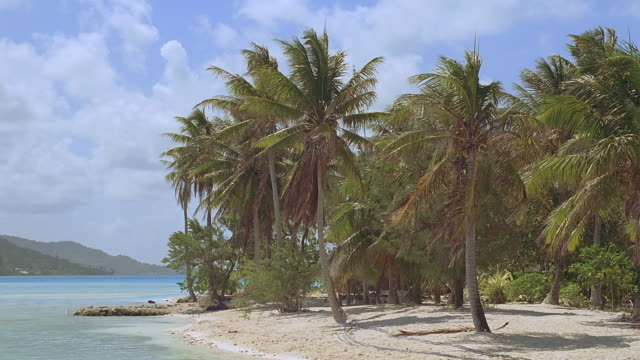ws island with palm trees beside blue sea / bora bora, tahiti  - bora bora stock videos & royalty-free footage