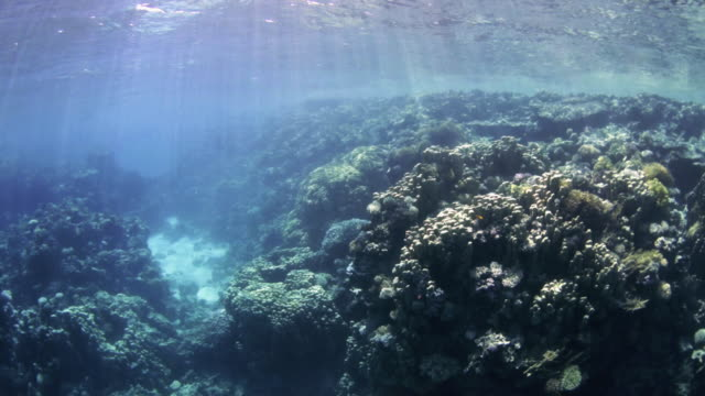 Islands Dive Site - Dahab, Egypt