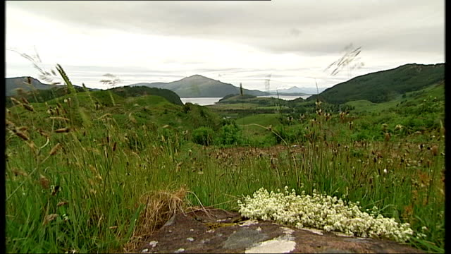 inner hebrides isle of skye ext boat along on water / mountains and lake / wildflowers / coastline / houses on coast / sea / ferry along /... - insel skye stock-videos und b-roll-filmmaterial