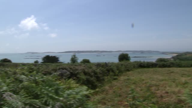 isles of scilly gvs, plants and wildlife; england: cornwall: isles of scilly: st martin's: ext village houses and cottages in middle town area / red... - wildlife stock videos & royalty-free footage