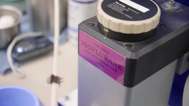 isoflurane device cu - wiese video stock e b–roll