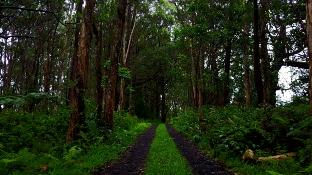 stockvideo's en b-roll-footage met geïsoleerde forest op maui eiland door drone - footpath