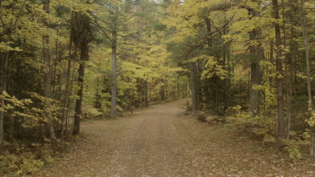 isolated forest road - country road stock videos & royalty-free footage