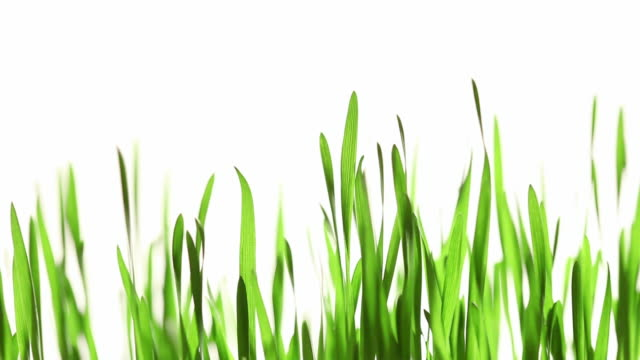 isolated grass - blade of grass stock videos and b-roll footage