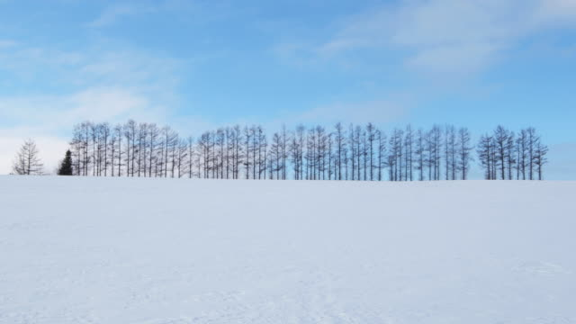 isolated trees in snowy japanese landscape, wide - kamikawa subprefecture stock videos and b-roll footage