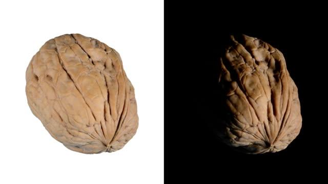 alpha: isolated walnut - nut food stock videos & royalty-free footage