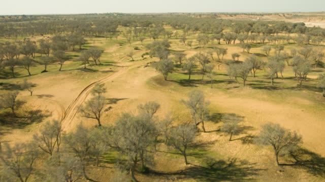 israel negev desert forest bird eye aerial shot - negev stock videos & royalty-free footage