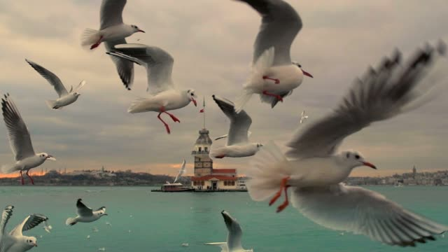 istanbul bosphorus - türkei stock-videos und b-roll-filmmaterial