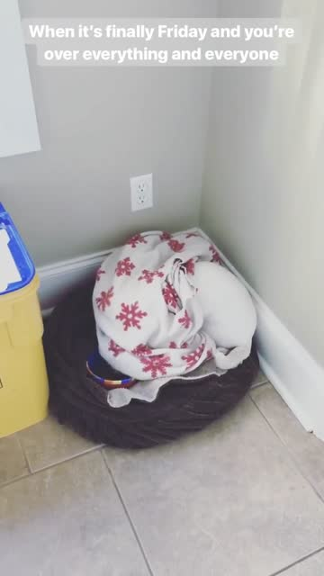it appears that after a long week, this dog has just had enough of everything and everyone! hilarious! - week stock videos & royalty-free footage