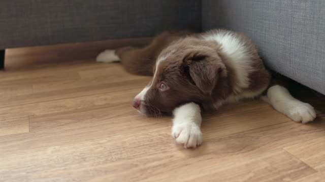 it has been a long day - border collie stock videos & royalty-free footage
