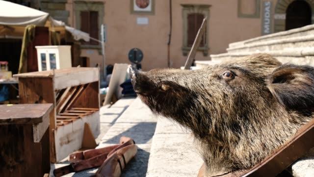 italian flea market embalmed wild boar - flea market stock videos & royalty-free footage