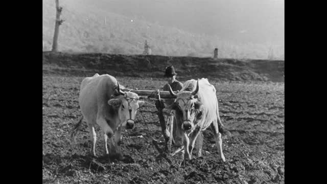 italian peasants plowing field after liberation of the area by allied forces - plough stock videos & royalty-free footage
