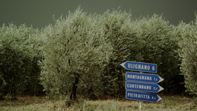 Italian street signs in front of olive trees
