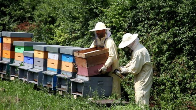 italy, apiculture, removing the hive - entfernt stock-videos und b-roll-filmmaterial