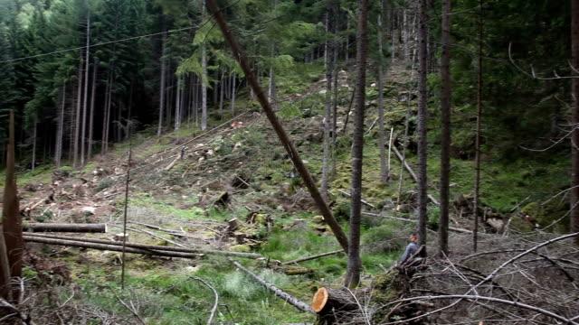 italy, cavalese, fall of a tree cut - カバレーゼ点の映像素材/bロール