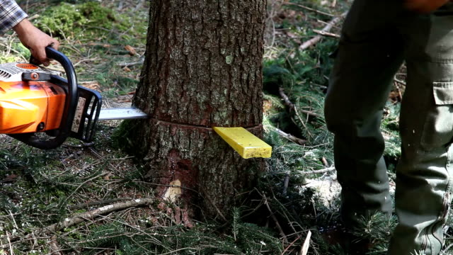 italy, cavalese, lumberjack chopping a spruce - holzfäller stock-videos und b-roll-filmmaterial