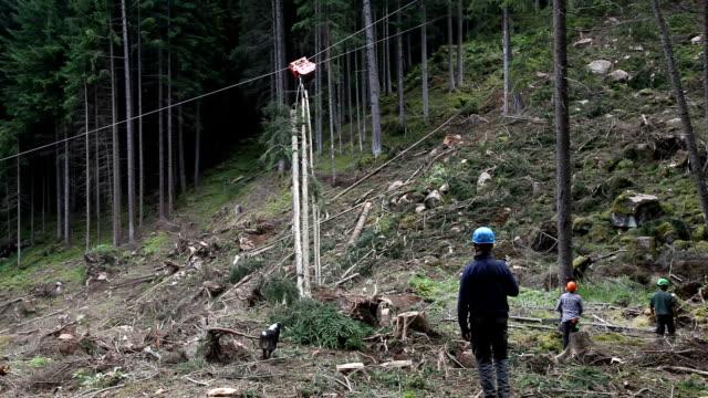 italy, cavalese, transport of a cut tree - カバレーゼ点の映像素材/bロール