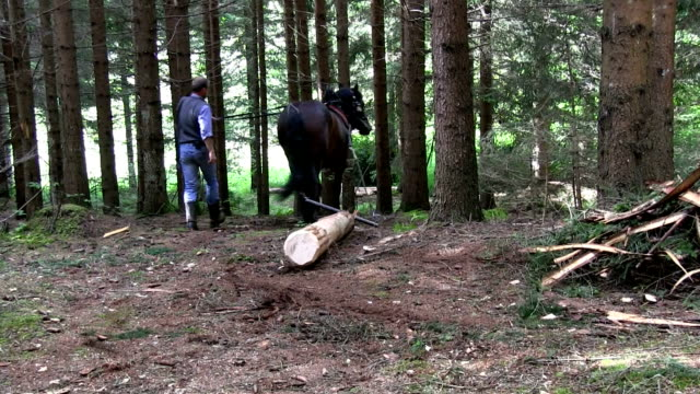 italy, cavalese, working in the wood with a horse to move the trunks - カバレーゼ点の映像素材/bロール