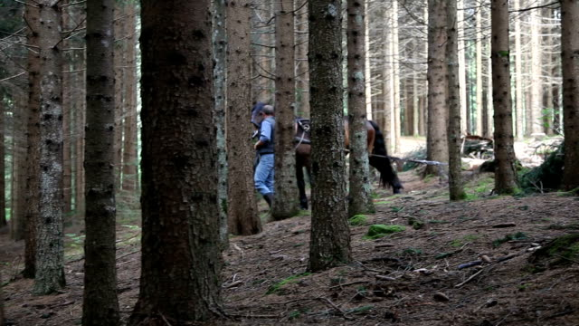 stockvideo's en b-roll-footage met italy, cavalese, working in the wood with a horse to move the trunks - alleen één mid volwassen man